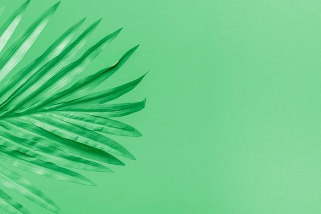 Зеленый фон с листьями и copyspace