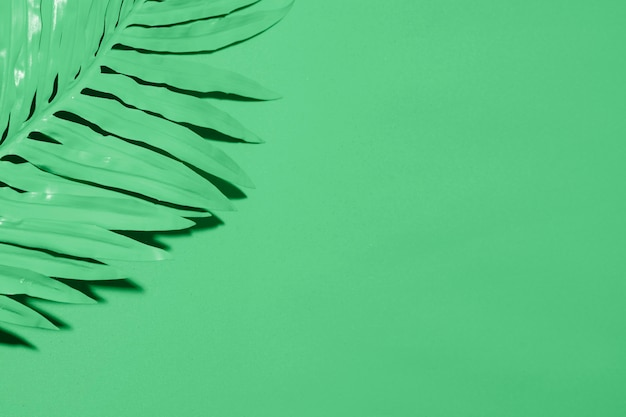 Green background with leaf and copyspace