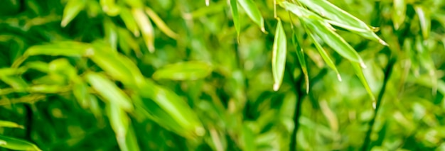 Green bamboo background fresh leaves on tree as nature ecology and environment concept