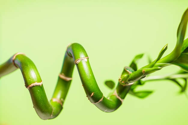 Green bamboo over background, spa concept