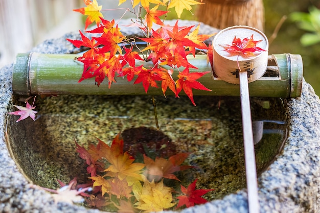 Green bamboo and falling red maple in water stone basin in japanese garden at enkoji temple in kyoto, japan. landmark famous in autumn season