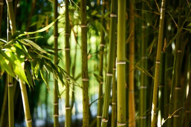 Зеленый бамбуковый лес при дневном свете