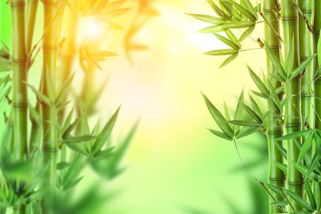 Зеленый бамбуковый лес естественный фон свежее утро