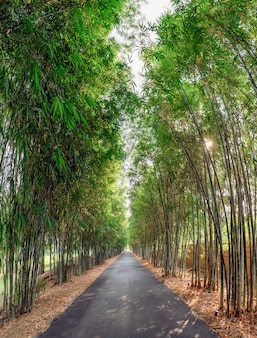 Green bamboo forest with asphalt road