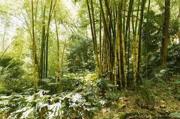 Green bamboo grove in forest