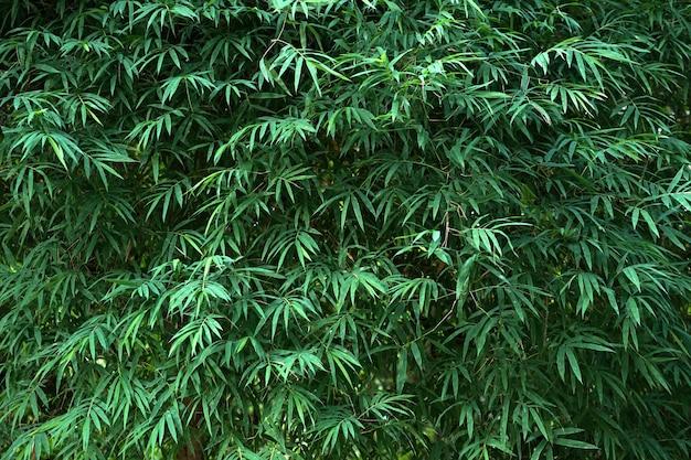 緑の竹の葉の背景