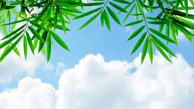 Green bamboo leaves and the blue sky
