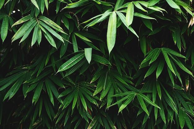 緑の竹の葉の背景のテクスチャ