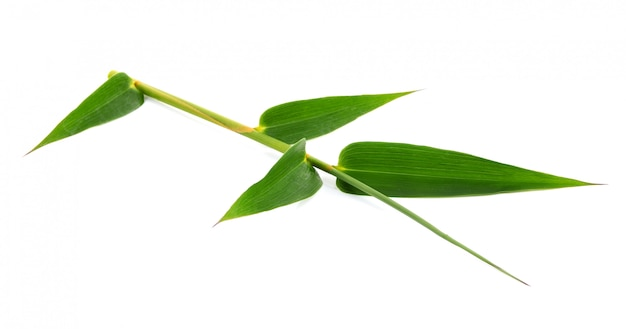 Green bamboo leaves on a white space