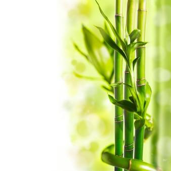 背景の上の緑の竹、スパのコンセプト