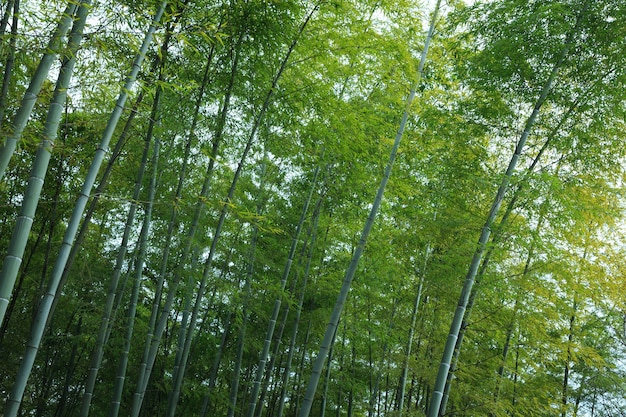 Green bamboo texture background
