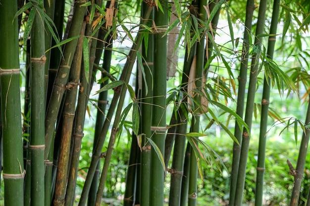 Зеленый фон из бамбука