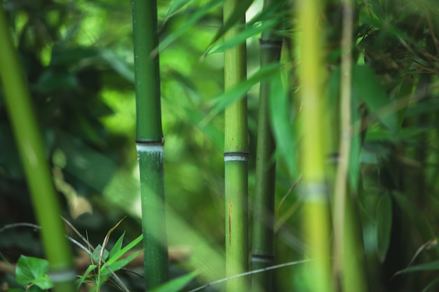 緑の竹の質感、美しい緑の葉と茎