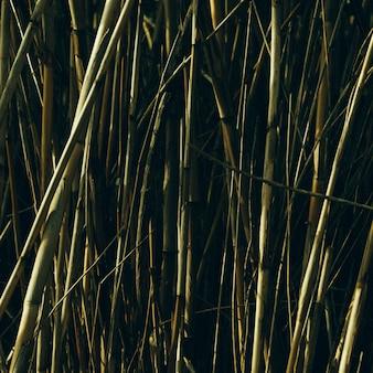 Green bamboo trees growing in garden