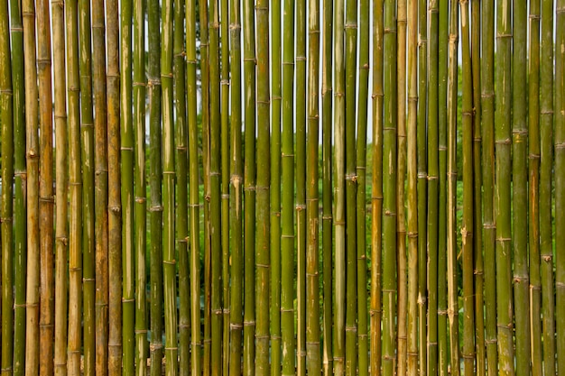 Green bamboo wall