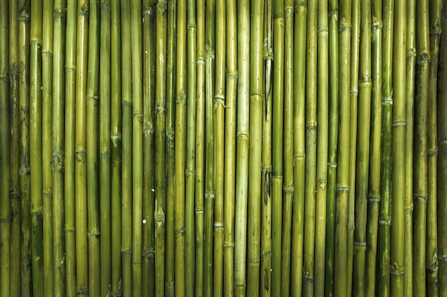 Green bamboo wood texture for defence garden wall