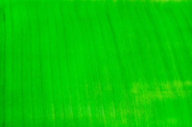 Green banana leaf textured background
