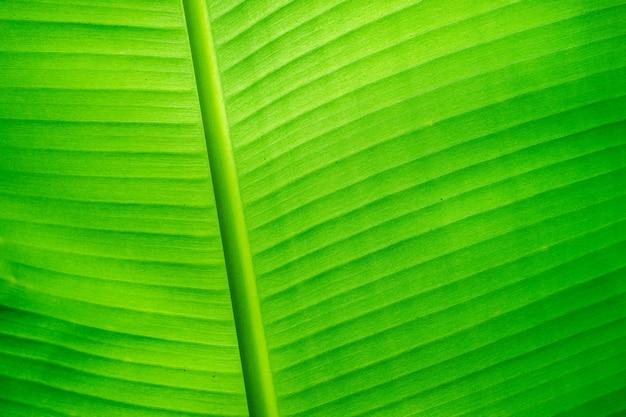 緑のバナナの葉