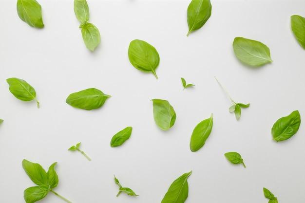 Зеленый базилик листья узор, изолированные на белом фоне вид сверху плоская планировка