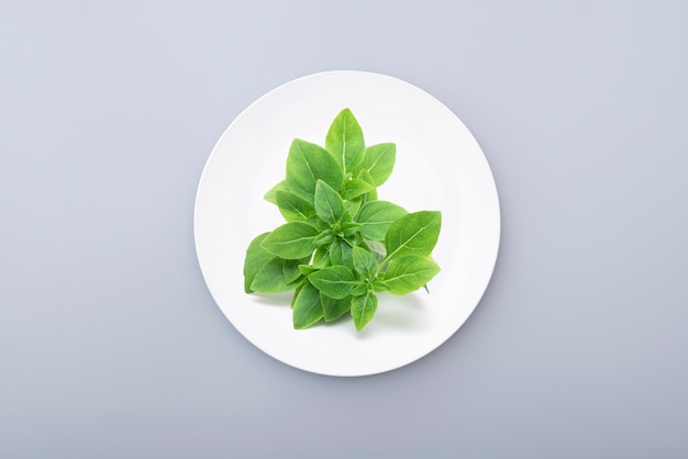 Green basil leaves on a white ceramic plate still life with minimal composition