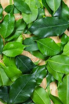 Green bay leaf background fills the frame