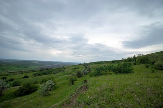 Зеленые красивые луга под пасмурным небом в начале лета