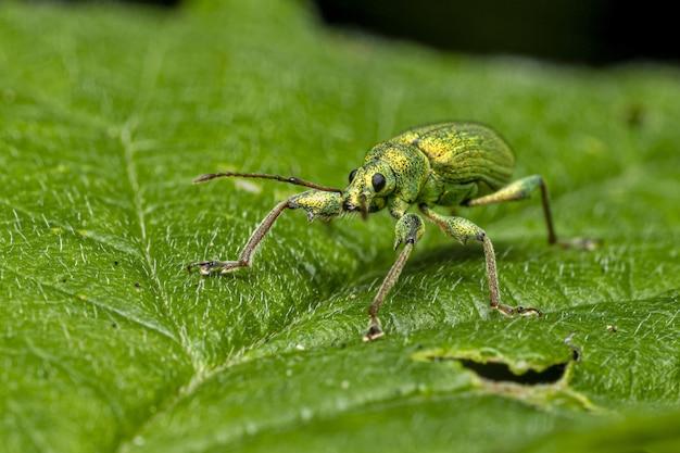 Зеленый жук сидит на листе