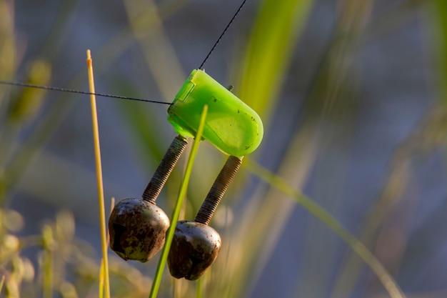 Зеленый колокольчик для прядения. размытый фон.