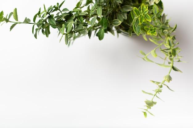 흰색 테이블 현대적인 디자인 인테리어에 꽃병에 녹색 beresklet 스핀들 트리