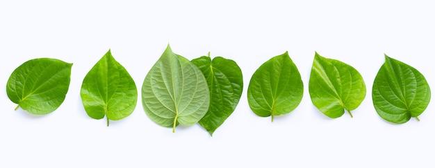 Зеленые листья бетеля, свежие волынки на белом фоне. вид сверху