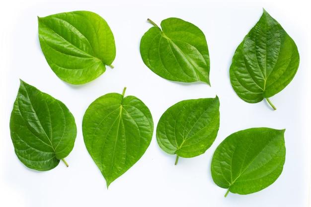 Зеленые листья бетеля, свежий волынщик на белом фоне