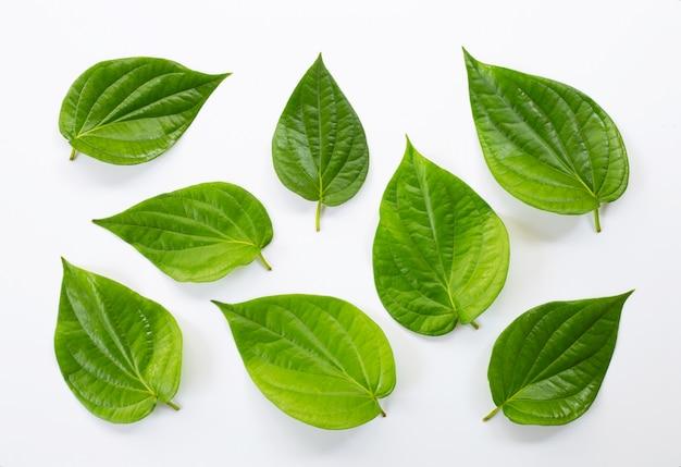 Green betel leaves, fresh piper betle on white