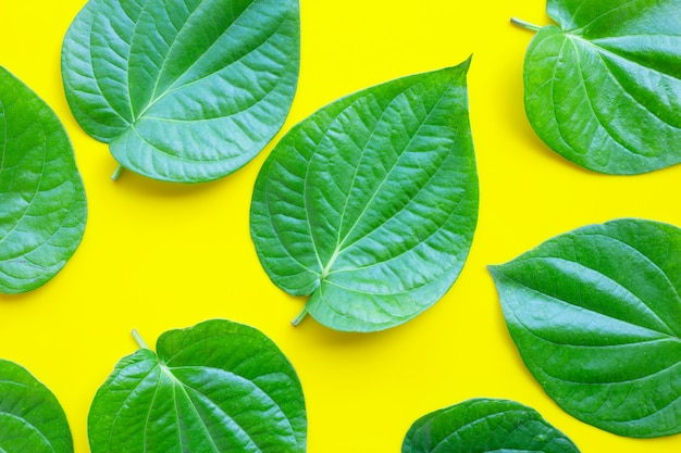 Green betel leaves, fresh piper betle on yellow background.