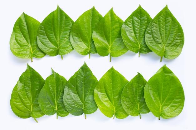 Green betel leaves on white