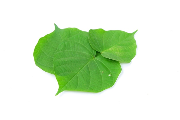Зеленый лист бидара, изолированные на белом фоне