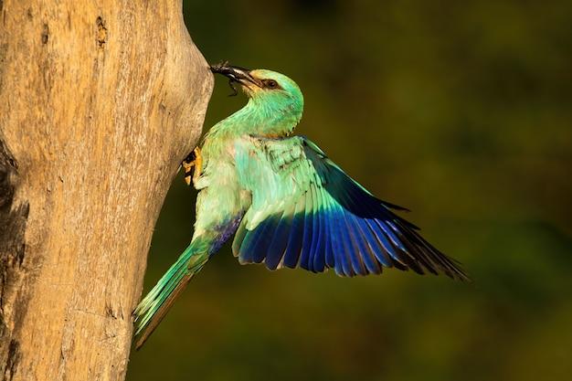 Green bird pecking a trunk