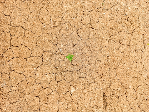 The green blade of grass sprouted from the dry cracked ground, the concept of the earth's day. the life force of nature.