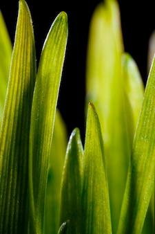Зеленые травинки.