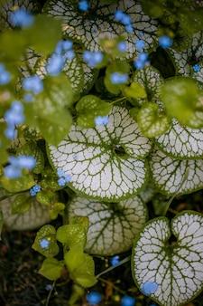 Boccioli di fiori verdi e blu
