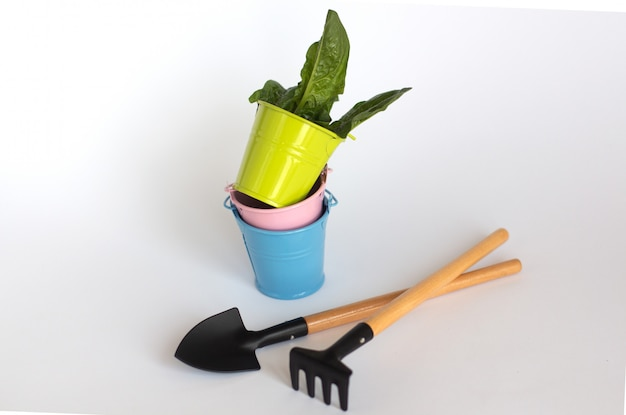 Green, blue and pink buckets with shovel and rake with juicy green leavs on white