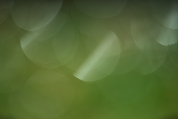Green blurred background of grass and sunlight.