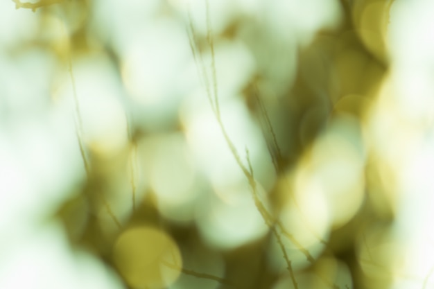 Green blurred background. green bokeh out of focus foliage background. fresh green bio abstract blurred background.