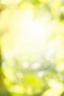 Green bokeh background. defocused abstract green background.