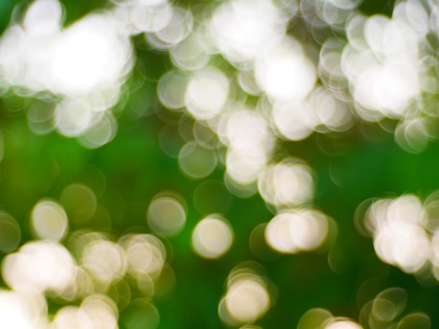 背景の緑のボケ味