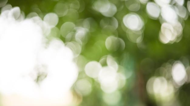 緑のボケの木の冠の美しいぼやけた背景