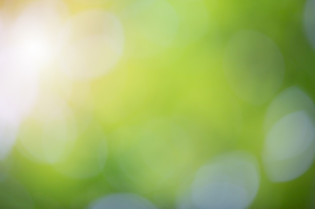 Green bokeh on nature blur background. element of design.