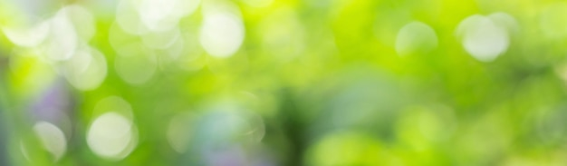 Зеленый боке не в фокусе фон от света природы.