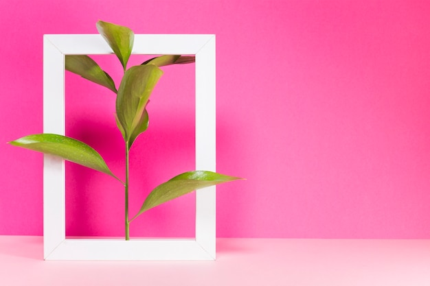 Green branch and frame