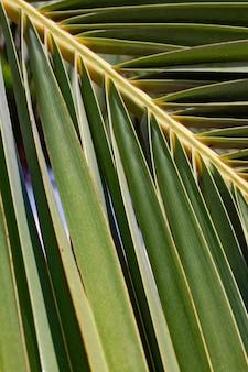 Зеленая ветвь пальмы как фон