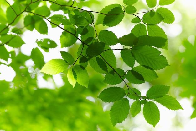 抽象的な背景の上の緑の枝。